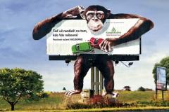 kooperativa-opice-zblizka_uprava-f